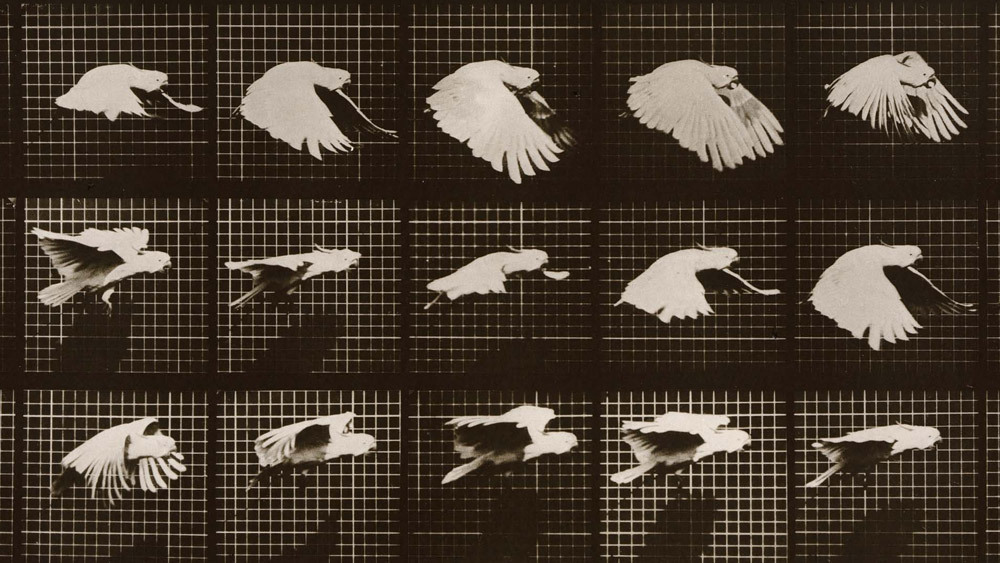 Design A Car Game >> Muybridge: The Man Who Made Pictures Move : NPR