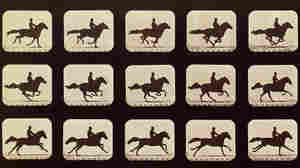 Running horse by Eadweard Muybridge