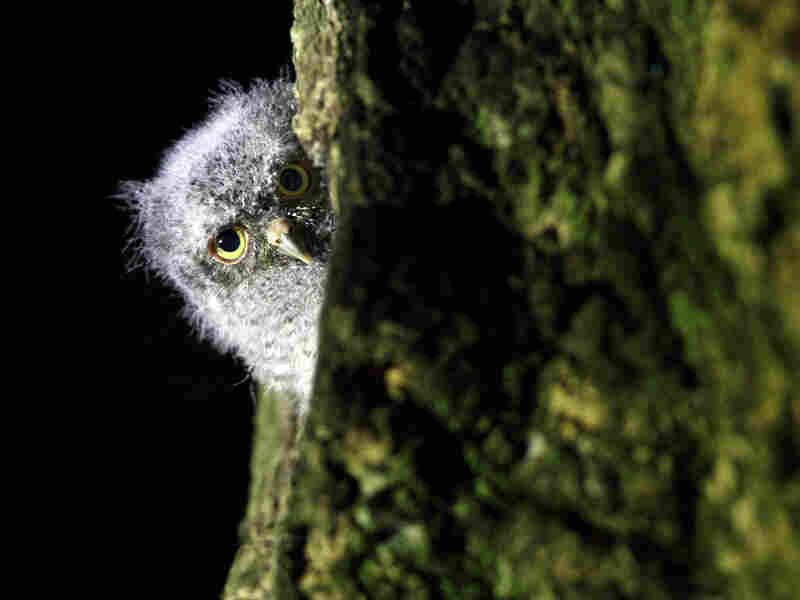 'Bob' peeks out from behind a tree.