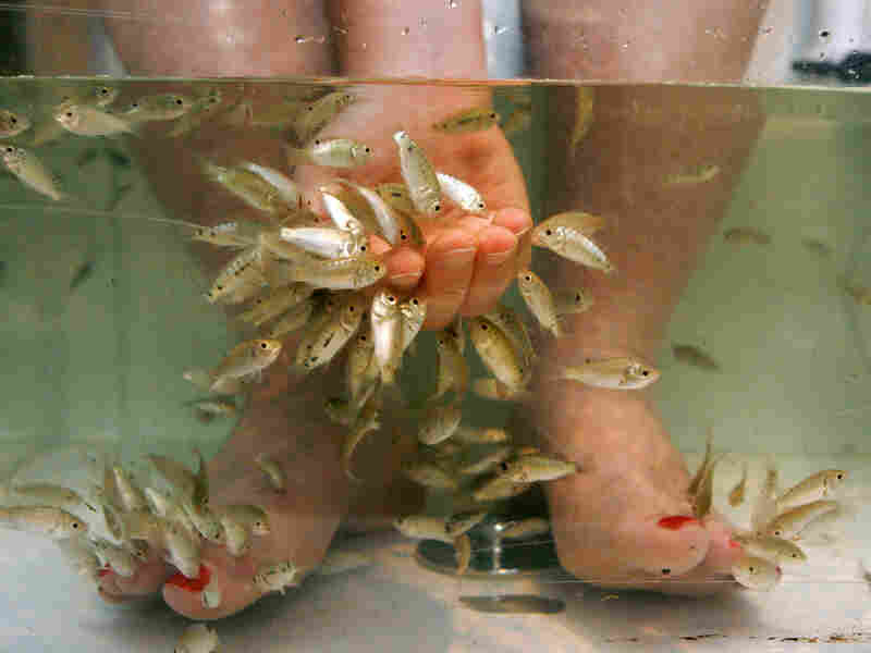 Fish pedicures, like this one at a salon in Alexandria, Va., in 2008, faces controversy.