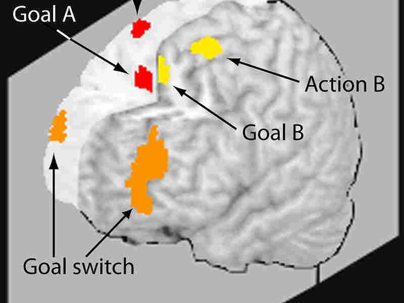 Illustration of multitasking brain