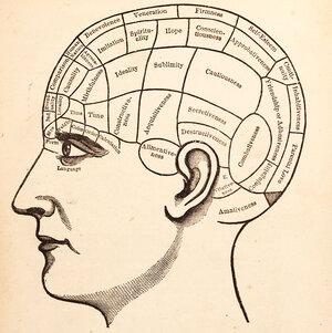 Vintage medical illustration of brain