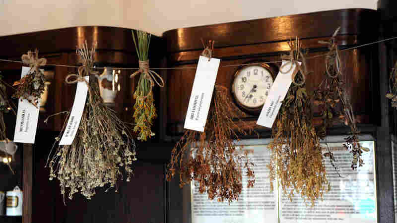 Herbs dry at the Old Town Pharmacy.
