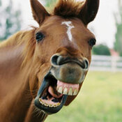 A horse shows off its teeth.