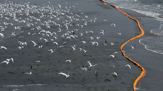 Birds fly over containment booms placed to try to stop oil from reaching the shoreline