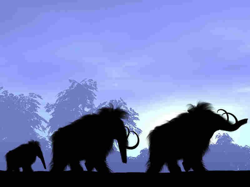 Illustration of woolly mammoths