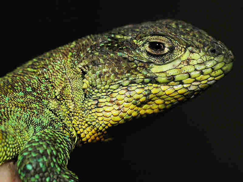 Many species could disappear before they are formally described.