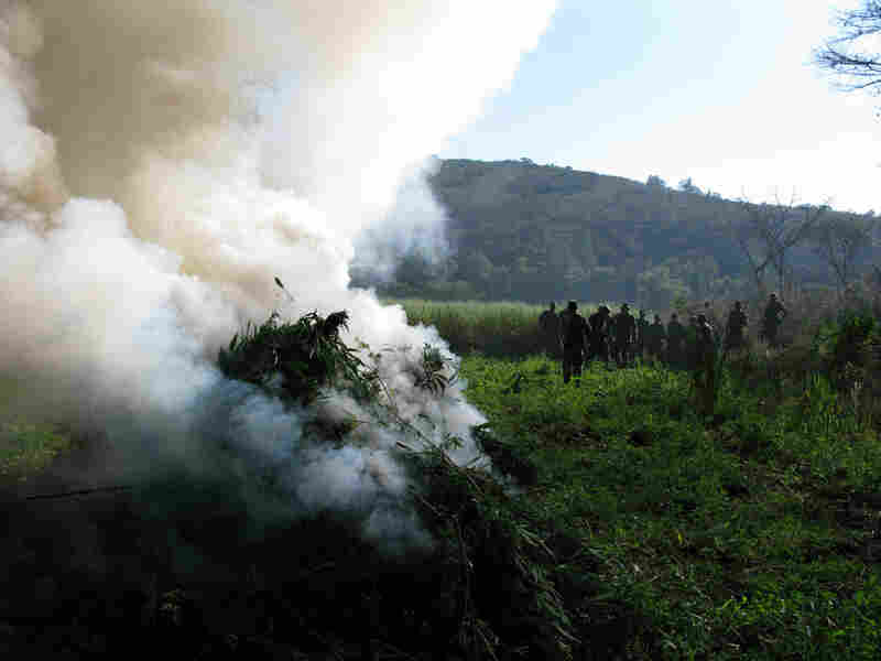 Mexican soldiers destroyed the field in the state of Michoacan where workers were harvesting pot.