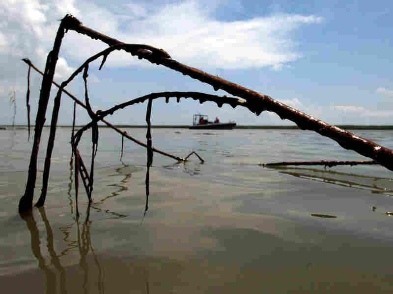 A Greenpeace boat floats near oil-soaked cane
