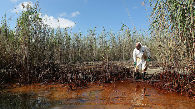 Phil Radford, executive director of Greenpeace USA, inspects oil-covered reeds along the Gulf of Mexico while visiting the disaster site on May 20. (Getty Images)