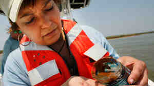 EPA Administrator Lisa Jackson looks at an oil sample from  water in Louisiana.