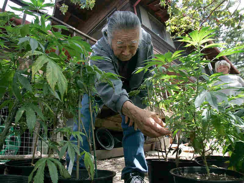 A Mendocino County man tends to his marijuana plants