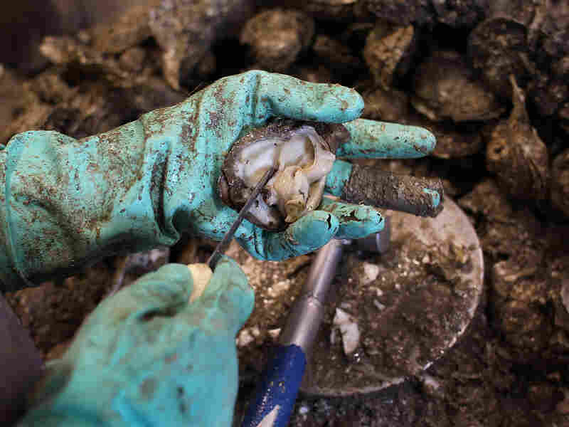A worker shells oysters at the P&J Oyster Company