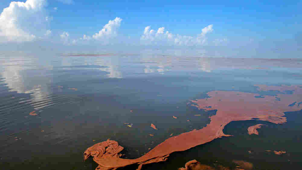 Oil from the Deepwater Horizon spill floats on the water on Barataria Bay off Louisiana.