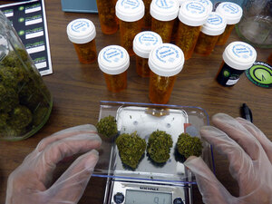 A worker at C420, an online dispensary, weighs four marijuana buds.