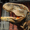 The head of Stephen Hershey's dinosaur costume.