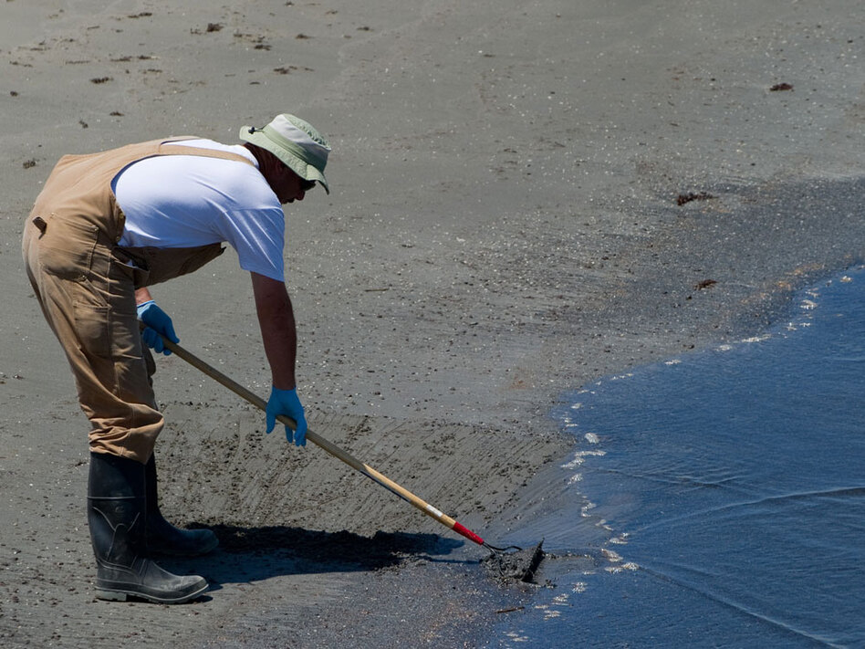 A worker collects oiled sand at Grand Isle State Park in Grand Isle, La.