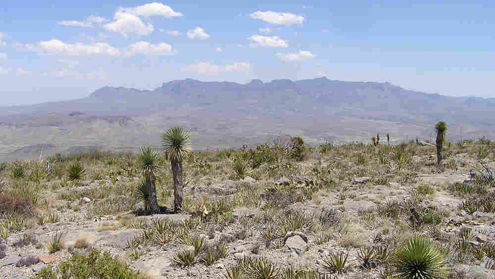 The Chisos Mountains in Brewster County near Big Bend National Park