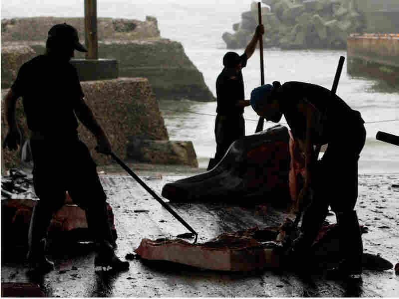Japanese whalers butcher a Baird's beaked whale