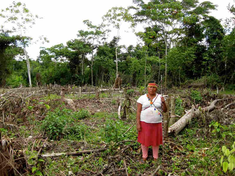 Ana Hualinga, a leader of Peru's indigenous Achuar people
