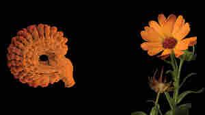 Seeds promo image