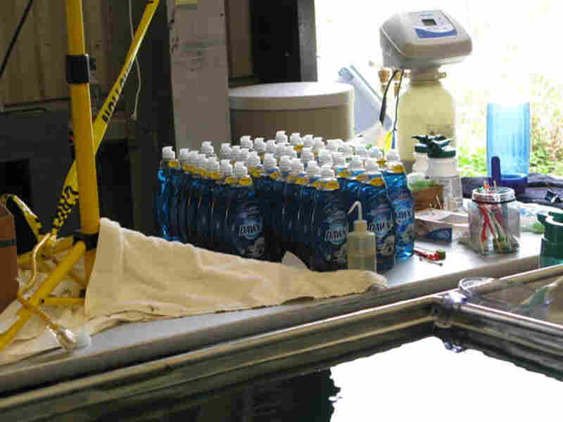 Dozens of bottles of Dawn stand like soldiers behind a row of deep sinks.