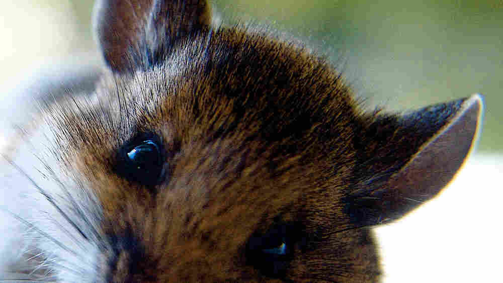 Close up of a cute mouse.