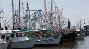Shrimp boats sit in the Pass Christian Harbor in Pass Christian, Miss.