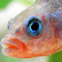 A Fishy Take On Human Skin Tones