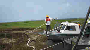 BP contractor on boat tries to sop up oil with an absorbent sponge.