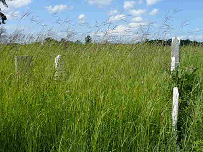 Big blue grass prairie at an Ohio cemetery.