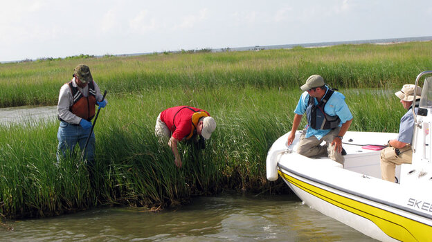 The Natural Resource Damage Assessment team inspects where oil landed at a wetland