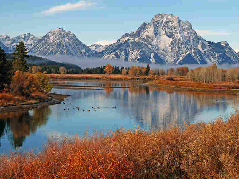 Fall colors on display in Grand Teton National Park