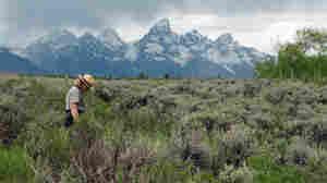 Grand Teton National Park spokeswoman Jackie Skaggs strolls across state land in the park
