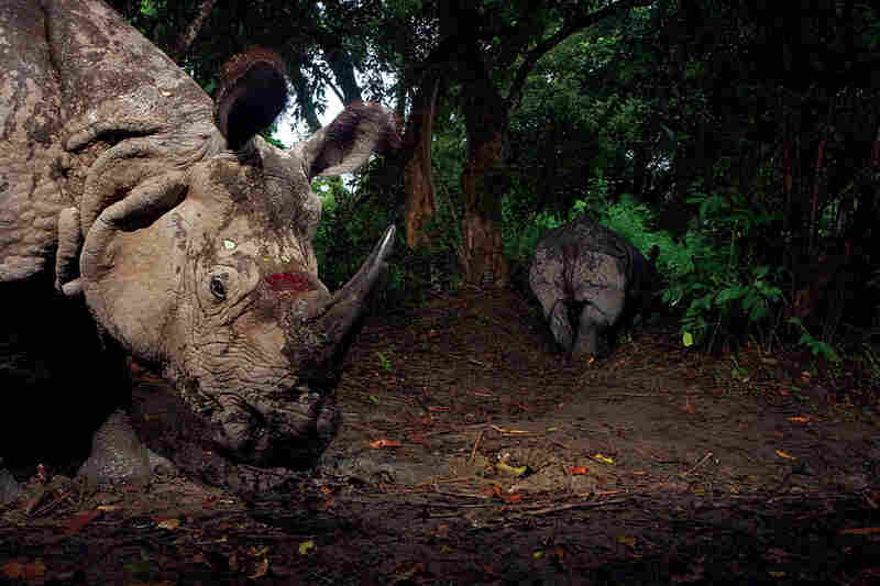 Rhinoceroses in India by Steve Winter