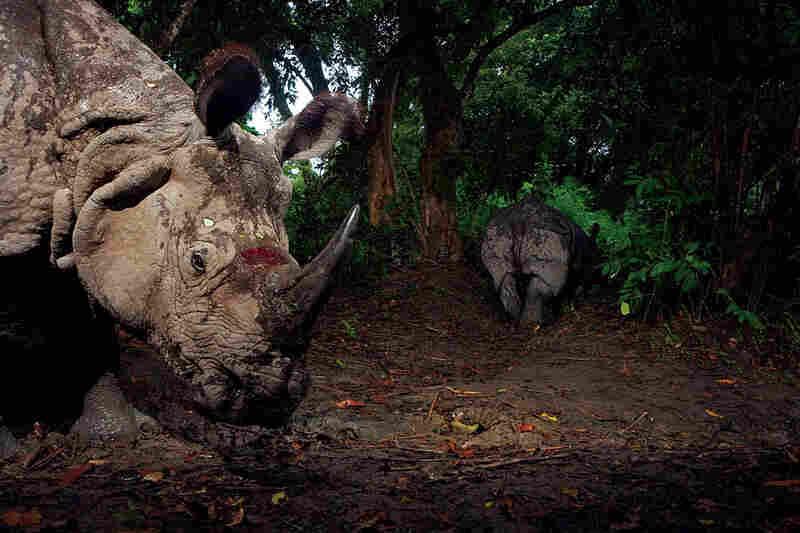 Rhinoceroses in India by Steve Winter