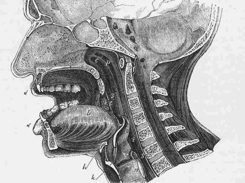 A 1930 anatomical diagram shows a vertical cross-section of the human head.