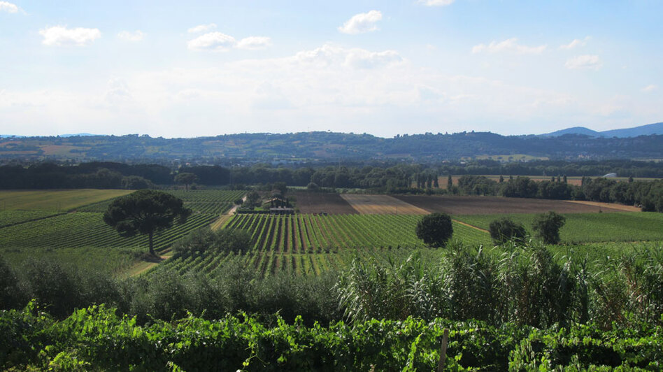 "The Italian region of Umbria is known as the ""green heart"" of the country. It is covered by miles and miles of vineyards."
