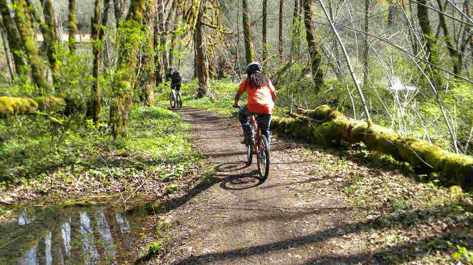 Mountain bikers on a trail in Oakridge, Ore.