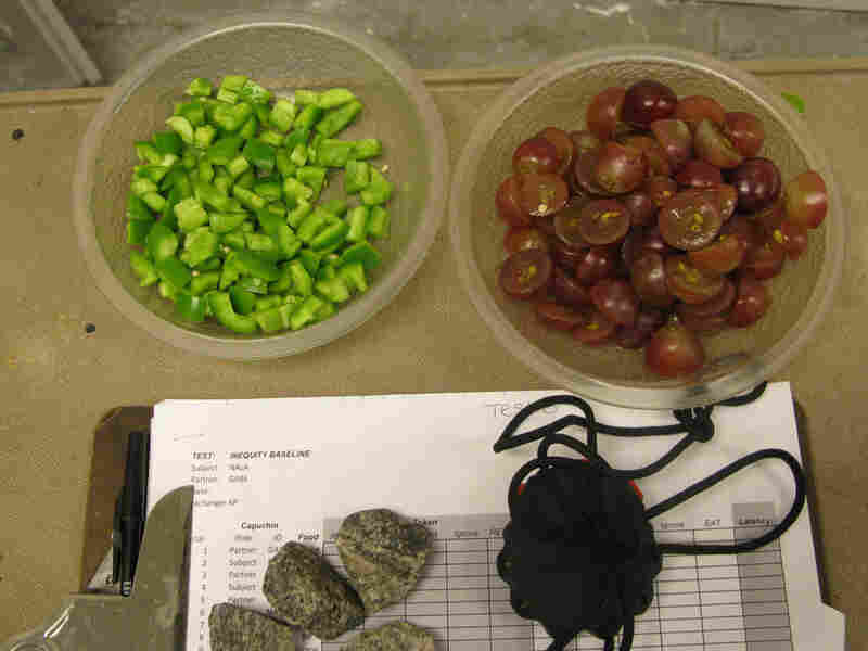 Cucumbers and grapes, used for testing the concept of fairness in capuchin monkeys.