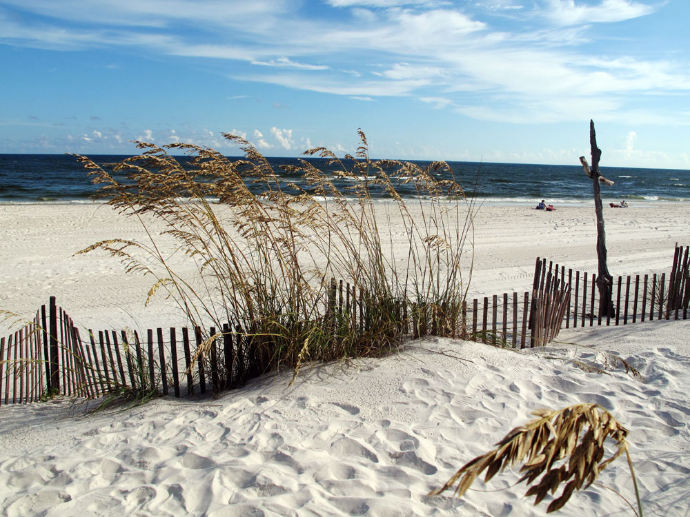 Tests confirm the presence of hydrocarbons on the sea oats that line the dunes in Orange Beach.