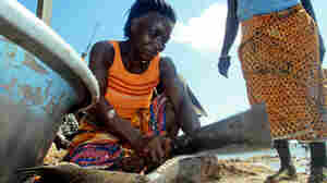 Esi Dede, slices through the fresh catch on the beach at the village of Apewosika, near Axim, Ghana.