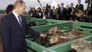 Putin's Reach Grips Russia's Provinces