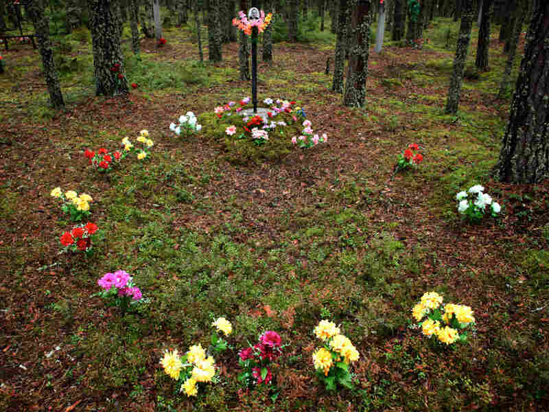 Plastic flowers mark a section of the mass graves at Sandarmokh, Russia