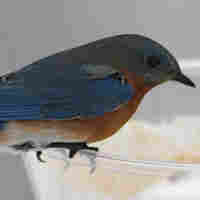 Bird Feeding Tips For The Urban Yard
