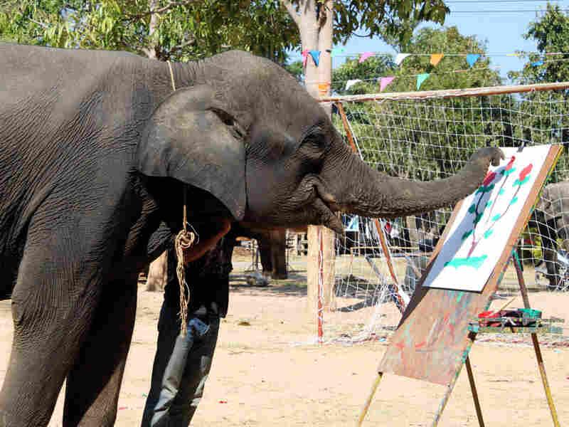 An elephant paints a picture for tourists in Ta Klang village