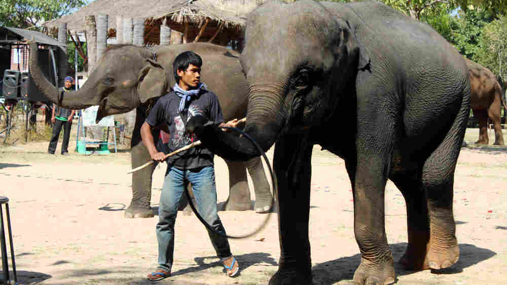 Elephants and their owners perform stunts for tourists in northeast Thailand