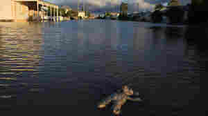 A stuffed animal floats in a flooded suburban street in Rockhampton.