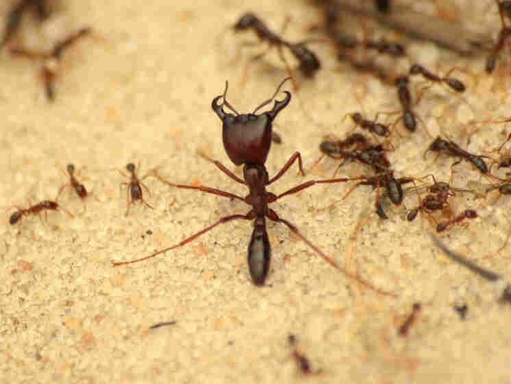 A swarm of ants invaded the burial site during the excavation of Umugisha.