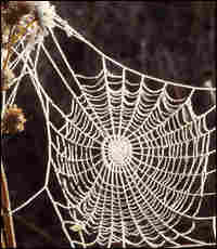 """The frost covered work of an """"orb web"""" spider."""